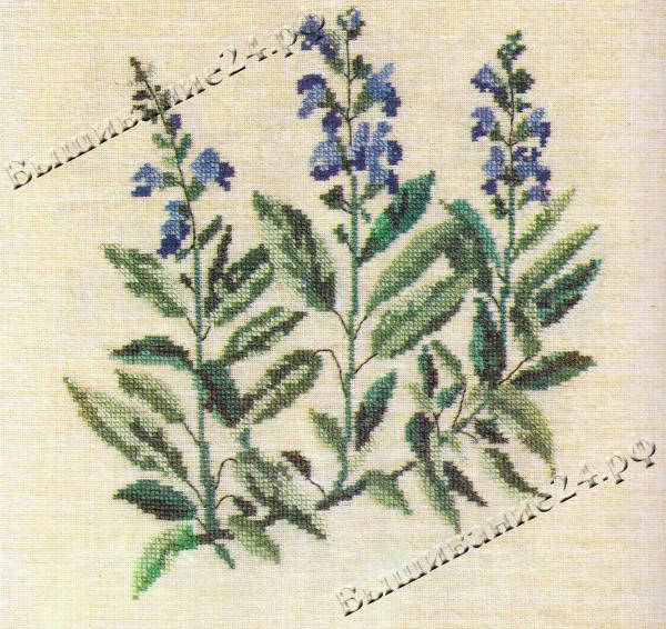 Схема вышивания крестом - Шалфей, цветы