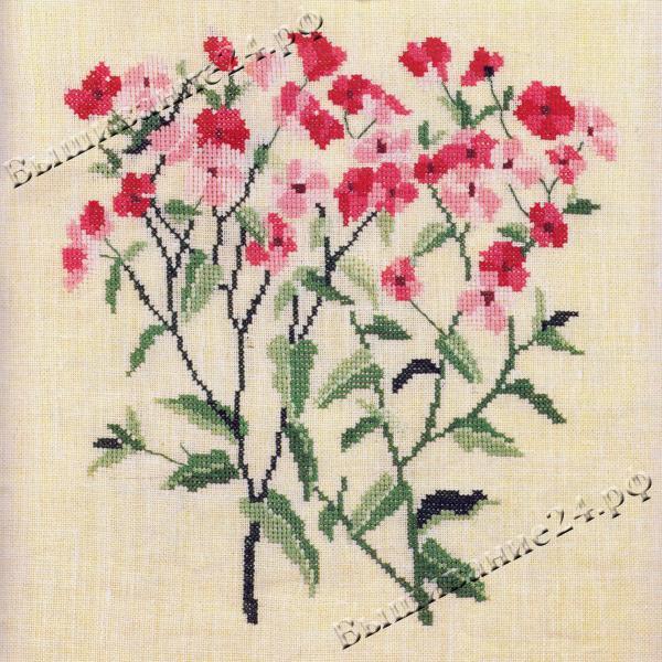 Схема вышивания крестом - Флокс однолетний, цветы