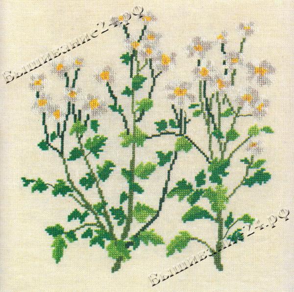 Схема вышивания крестом - Ромашка девичья, цветы